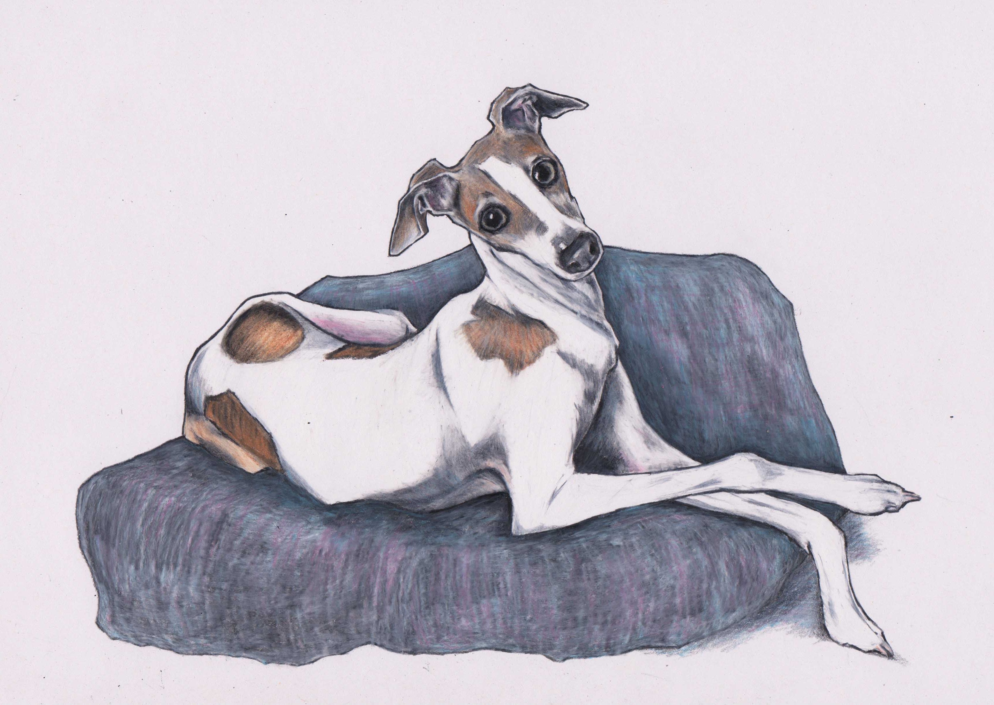 2017 Italian Greyhound Art. This Is Zoe The Iggy (View 2 of 15)