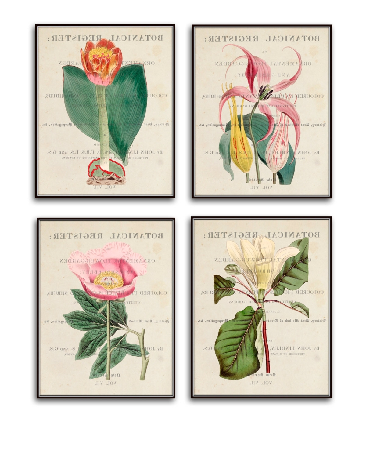 2018 Wall Art Print Sets Pertaining To Vintage Botanical Print Set No (View 1 of 15)