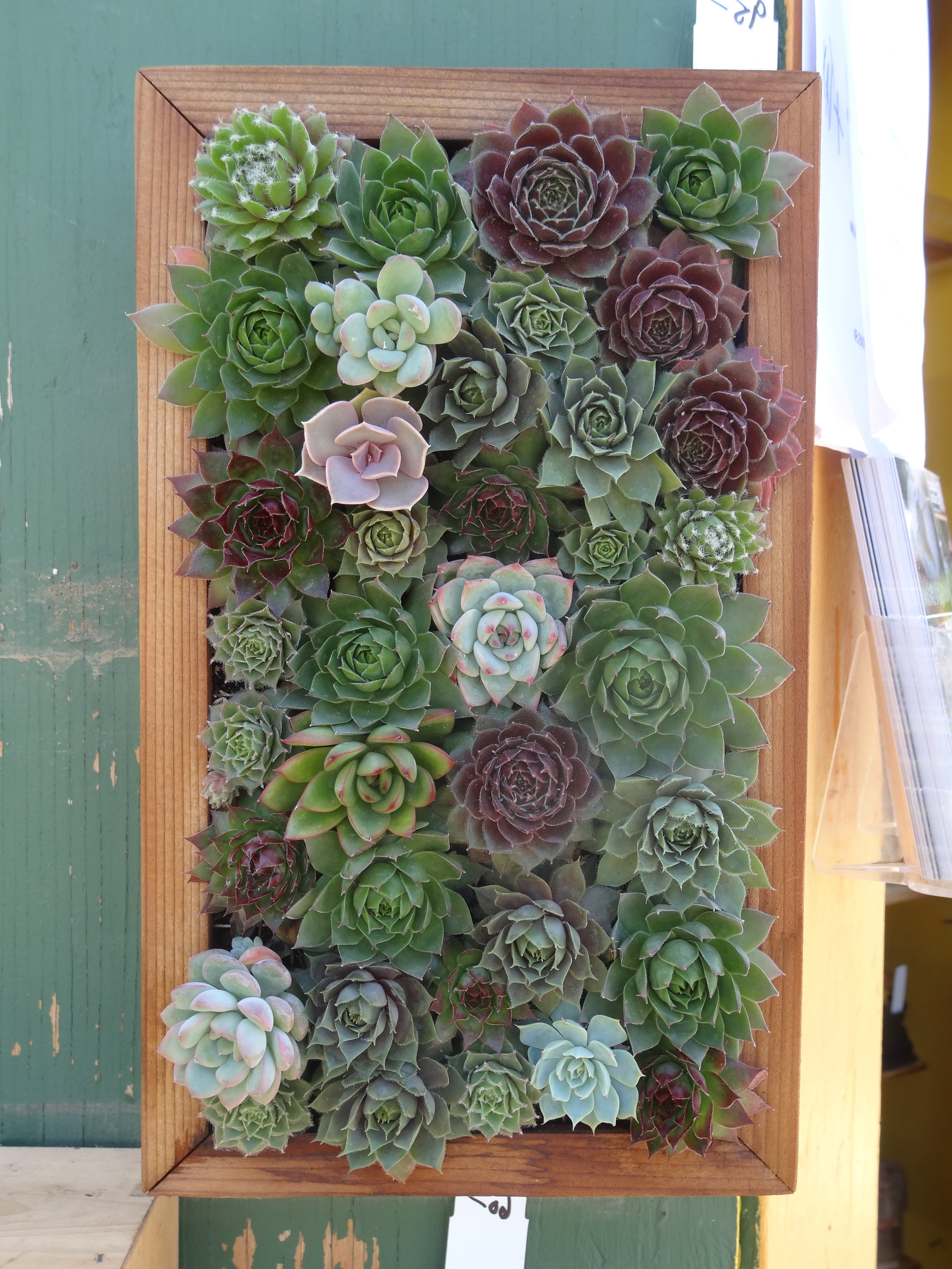 40 Lovely Ideas Succulent Wall Art (View 2 of 15)