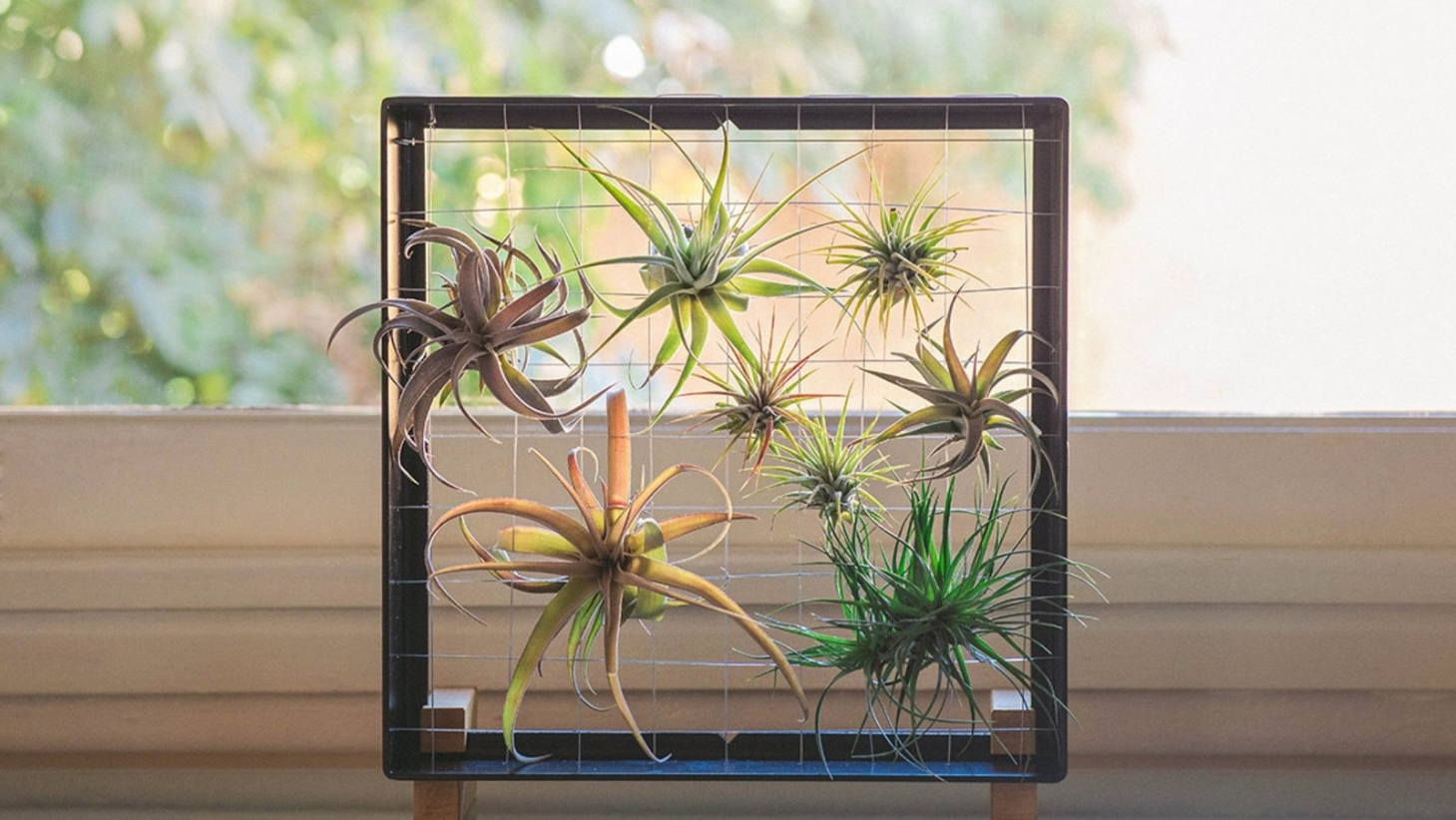 Air Plant Wall Art Inside Most Recent Vase : Air Plant Containers Beautiful Air Plant Vases Set Of Three (View 3 of 15)