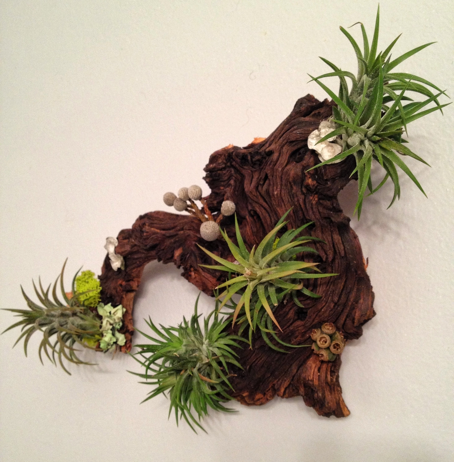 Air Plants And Moss Wall Garden – Living Wall Art – A Unique Within Newest Air Plant Wall Art (View 6 of 15)