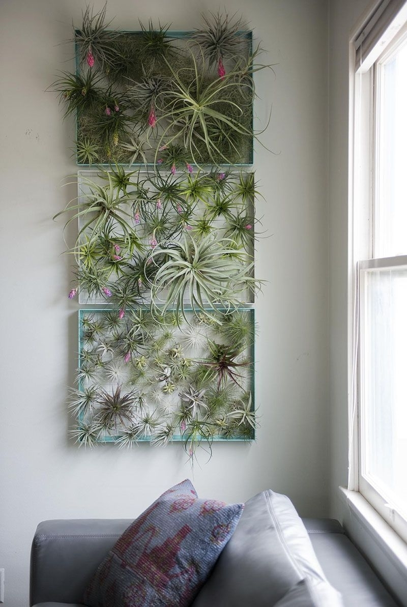Air Plants Intended For Air Plant Wall Art (View 7 of 15)