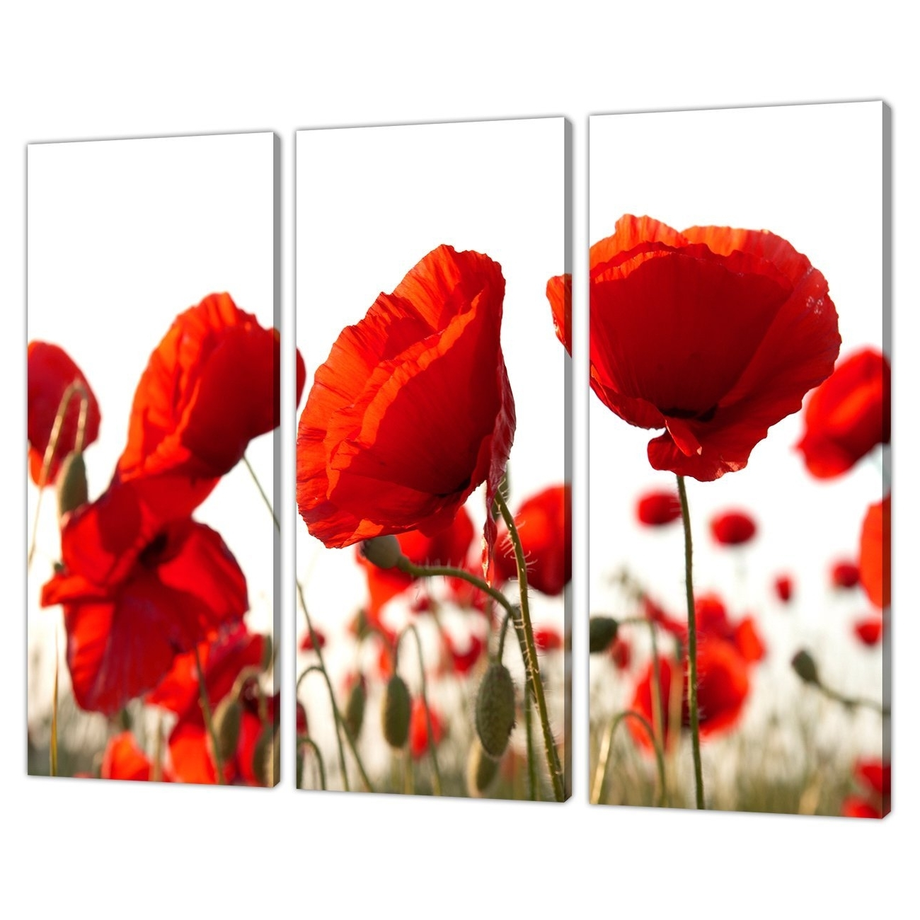 Best And Newest Red Poppy Canvas Wall Art Regarding Set Of Three Red Poppy Canvas Prints Pictures Wall Art Poppies (View 2 of 15)