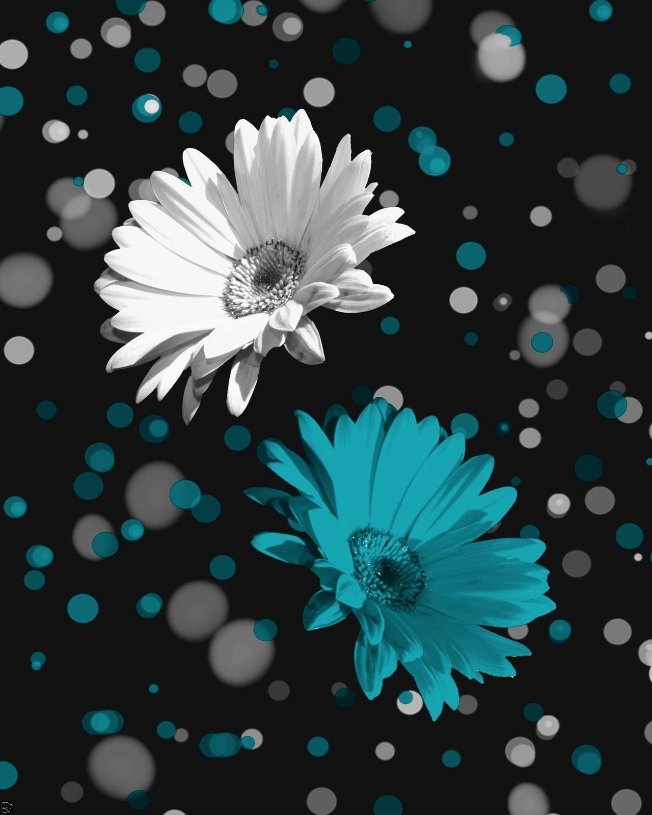 Current Teal And Black Wall Art Inside Black White Teal Daisy Flowers Wall Art Home Decor Matted Picture (View 4 of 15)