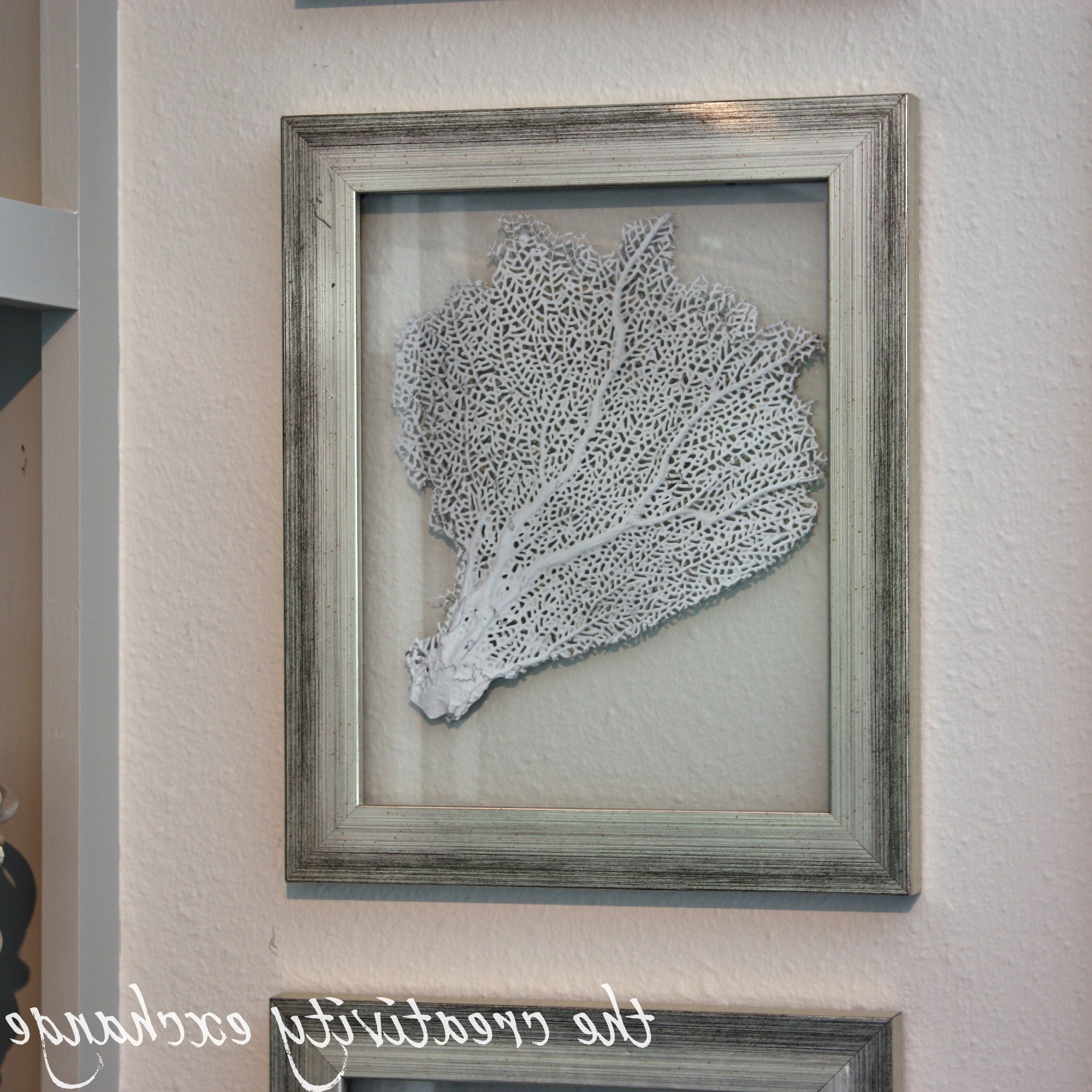 Famous Diy Double Sided Glass Frames For Framing Shells Or Dyed Sea Fans Pertaining To Sea Fan Wall Art (View 9 of 15)