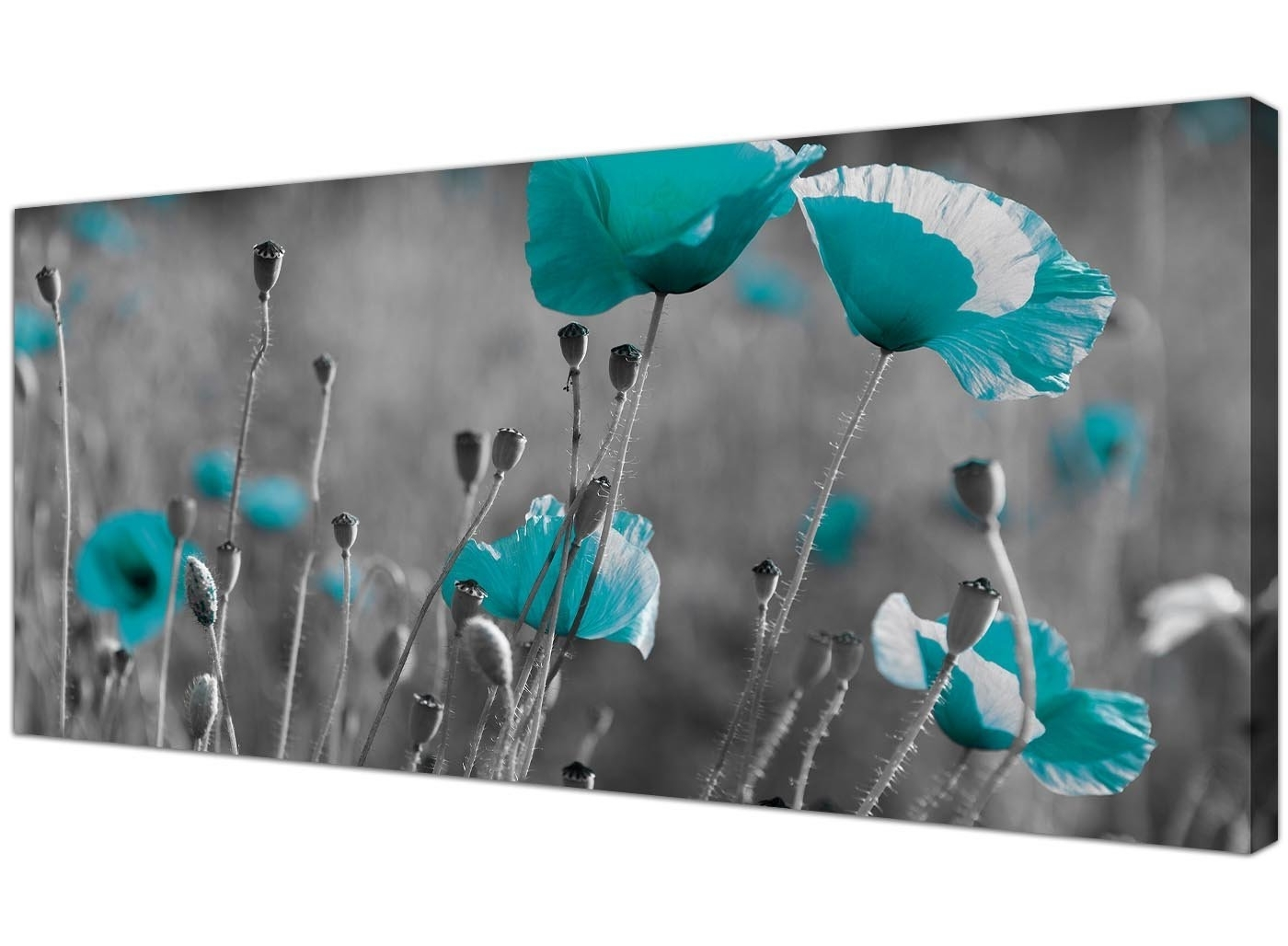 Fashionable Teal And Black Wall Art Pertaining To Modern Black And White Canvas Prints Of Teal Poppies – Wide (View 5 of 15)