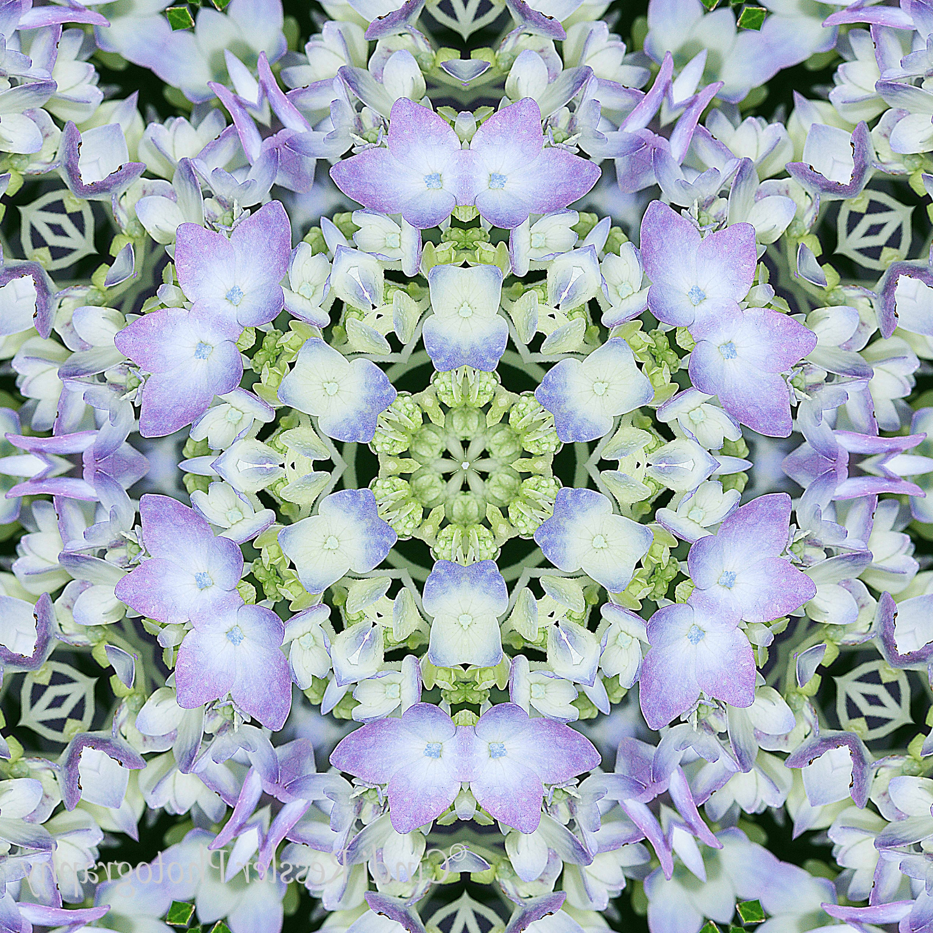Favorite Photography, Hydrangea Kaleidoscope, Fine Art, Flower, Wall Art With Kaleidoscope Wall Art (View 2 of 15)
