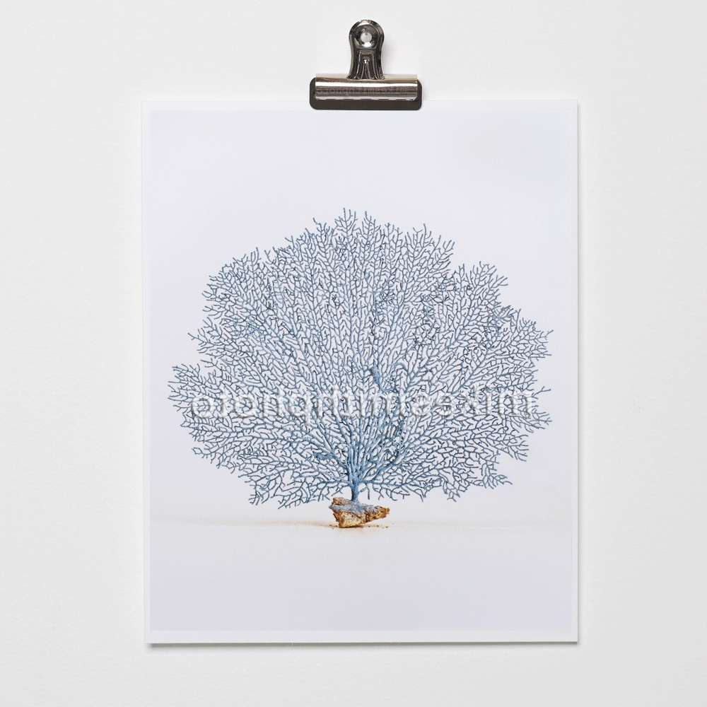 Favorite Sea Fan Wall Art For Sea Life Series – Mike Smith Photography (View 13 of 15)