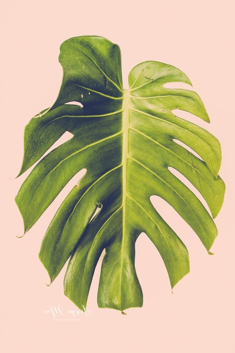 Floral & Plant Wall Art Regarding 2017 Monstera, Monstera Leaf, Plant Photography, Floral Photography (View 8 of 15)