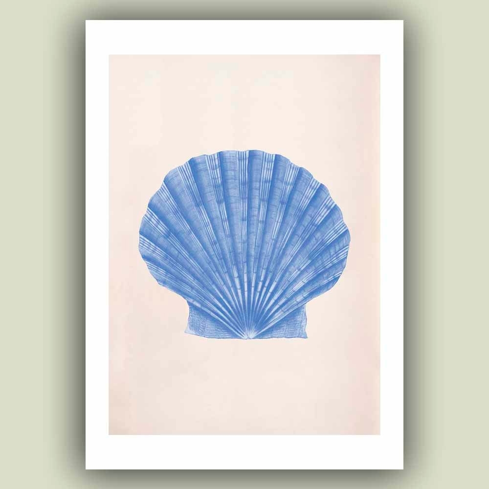 Latest Seashell Scallop Print, 5X7 Vintage Pecten Maximus Sea Shell Print Throughout Seashell Prints Wall Art (View 5 of 15)