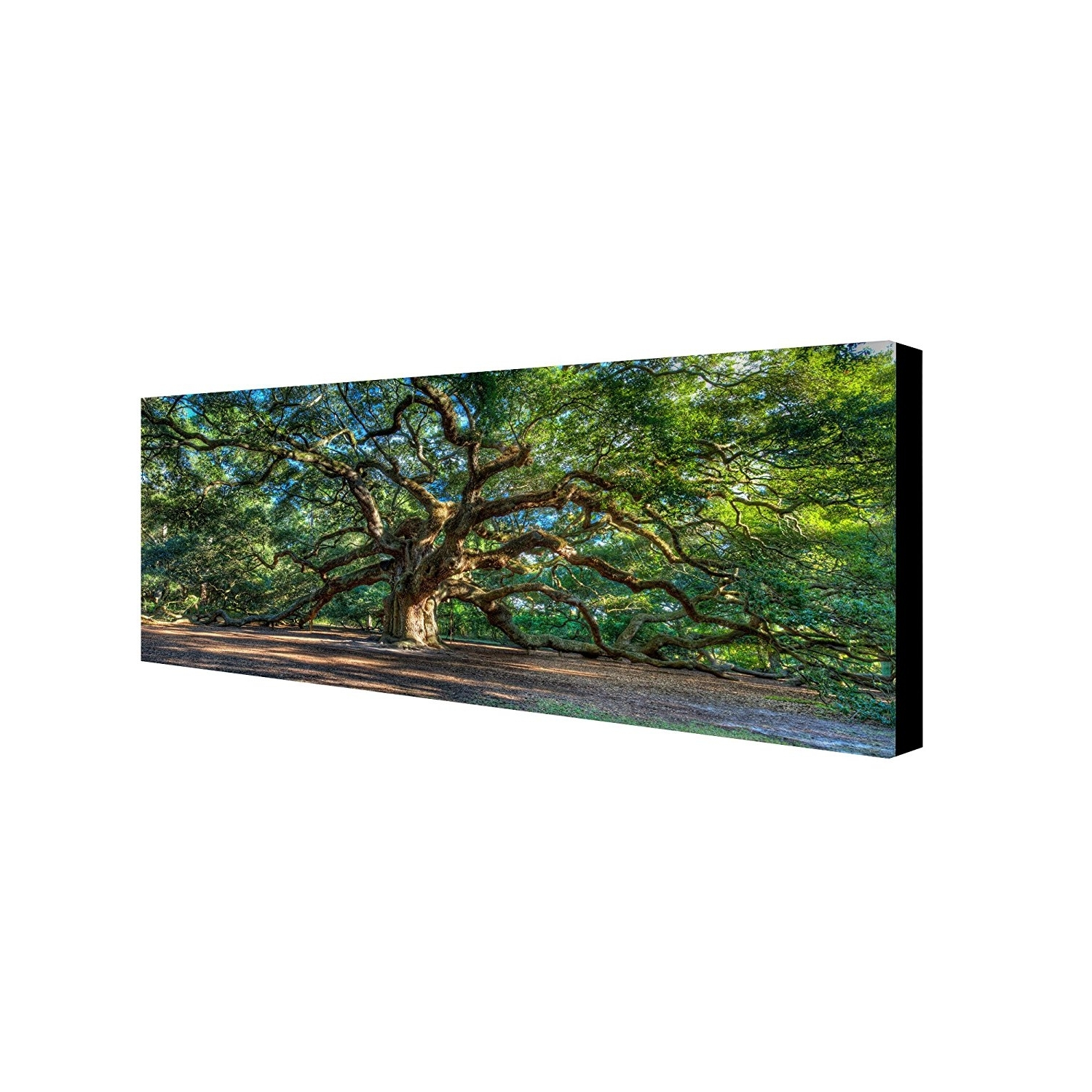 Live Oak Tree Wall Art With Regard To Well Liked Amazon: Angel Oak Charlestonpierre Leclerc Work,  (View 6 of 15)