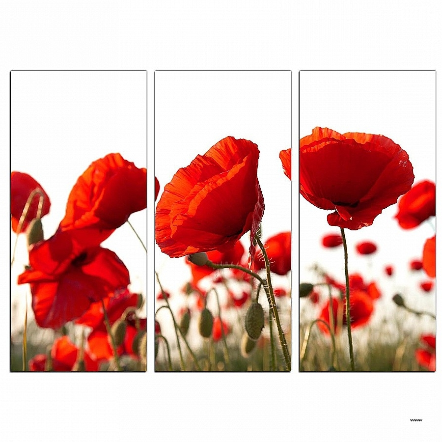 Most Current Canvas Wall Art Sets Of 3 Regarding Canvas Wall Art Sets Of 3 New Poppy Canvas Wall Art Set Of 3 For (View 9 of 15)