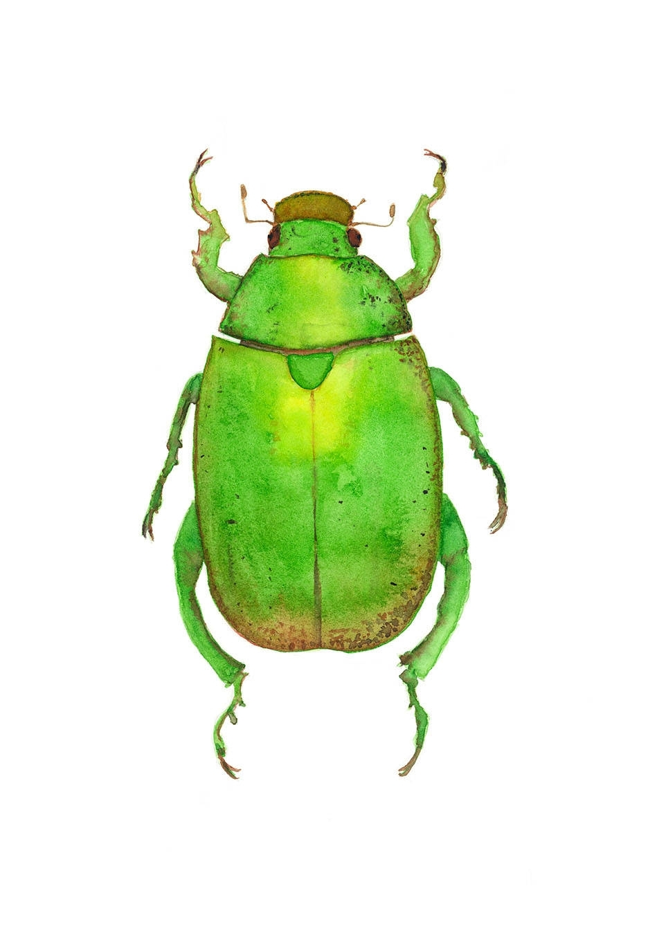Most Current Christmas Beetle Print, Insect Wall Art, Green Bug Illustration For Insect Wall Art (View 13 of 15)