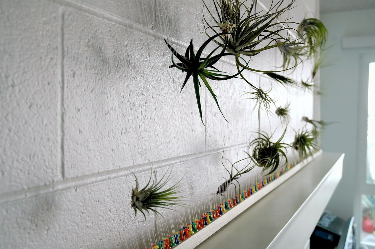 Newest Airplant Wall (Gallery 12 of 15)