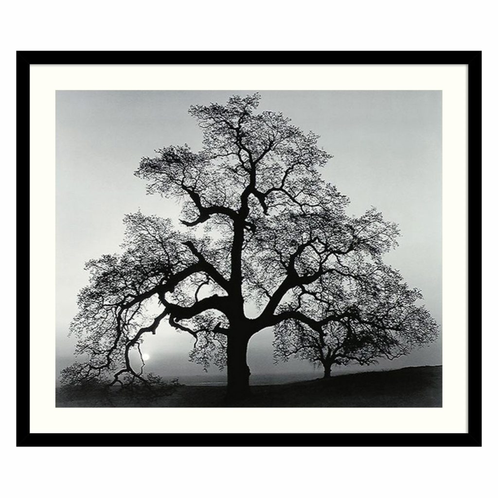 Oak Tree Wall Art With Most Up To Date Pleasurable Ideas Black And White Framed Wall Art Floral For (Gallery 10 of 15)