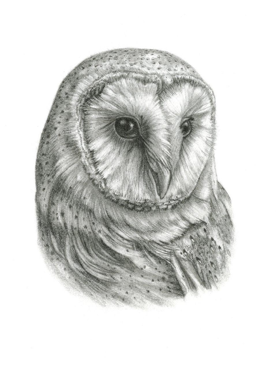 Popular Framed Original Barn Owl Drawingthebriarartshop On Etsy (View 12 of 15)