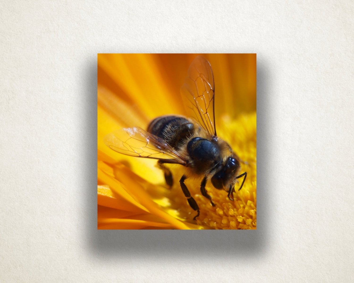 Preferred Flower And Bee Canvas Art, Bee Close Up Wall Art, Insect Canvas Intended For Insect Wall Art (View 7 of 15)