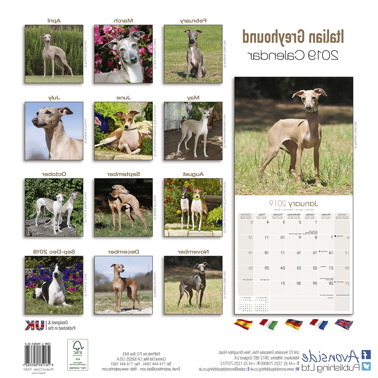 Preferred Italian Greyhound Wall Art Throughout Italian Greyhound Calendar  (View 12 of 15)
