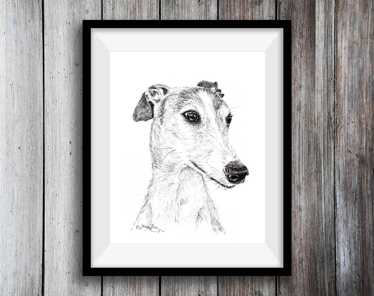 Spanish Greyhound Print Greyhound Art Print Spanish Intended For Most Recently Released Italian Greyhound Wall Art (View 14 of 15)