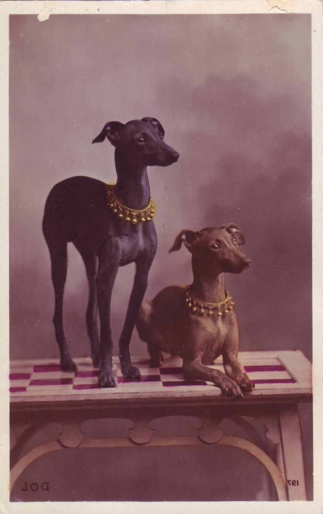 Vintage Postcard Of 2 Italian Greyhound (View 15 of 15)