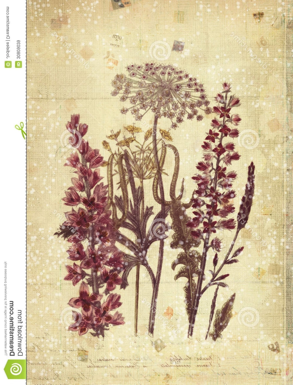 Vintage Style Wall Art Within Best And Newest Flowers Botanical Vintage Style Wall Art With Textured Background (View 6 of 15)