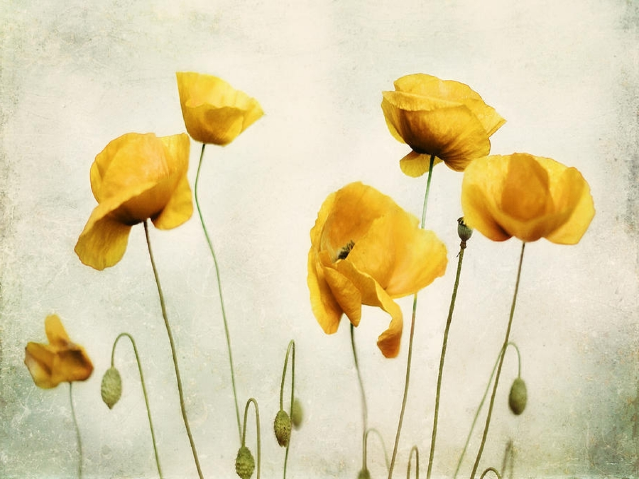 Wall Art Designs: Poppy Wall Art Yellow Poppy Yellow Poppies Wall Pertaining To 2017 Metal Poppy Wall Art (View 11 of 15)