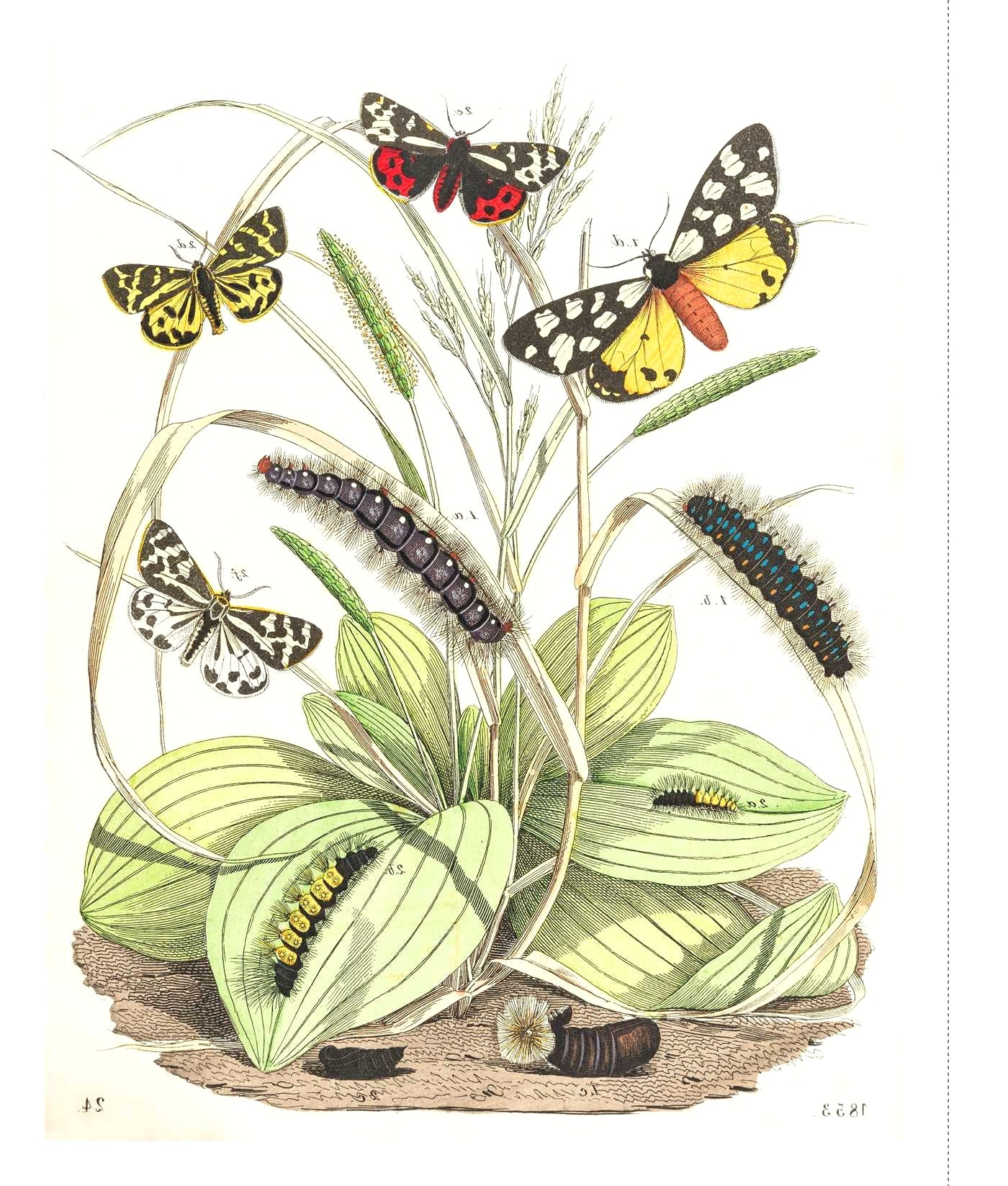 Wall Arts ~ Trailing Butterflies Metal Wall Art Paper Butterflies In Widely Used Dragonfly 3d Wall Art (View 13 of 15)
