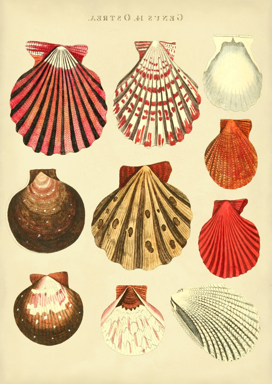 Well Known Seashell Prints Wall Art With Seashells Print Of Oyster Shells, Poster, Beach House Wall Art (View 14 of 15)