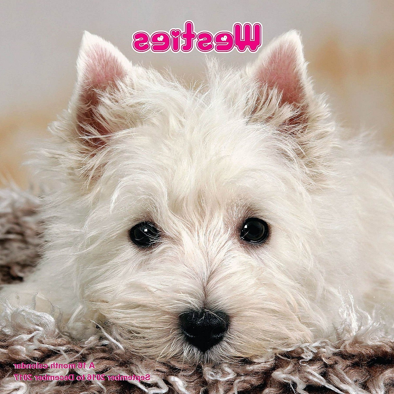 Well Known West Highland Terrier Calendar – 2017 Wall Calendars – Calendar Regarding Westie Wall Art (View 9 of 15)