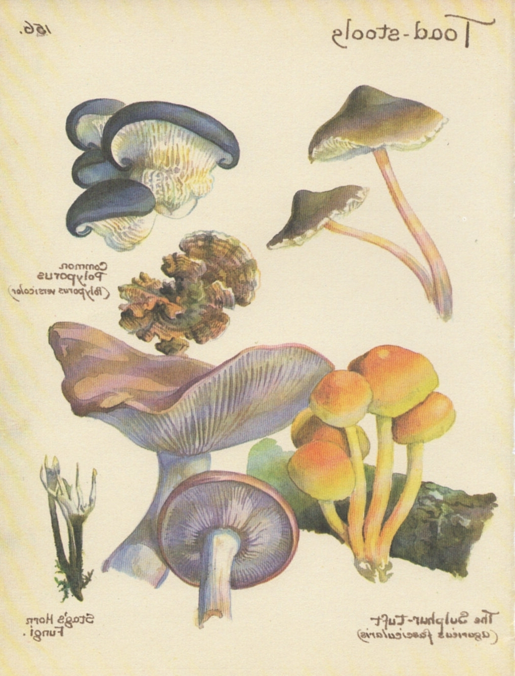 Well Liked Botanical Prints Etsy In Mushrooms Print Vintage Botanical Print Toadstools Autumn Decor (View 12 of 15)