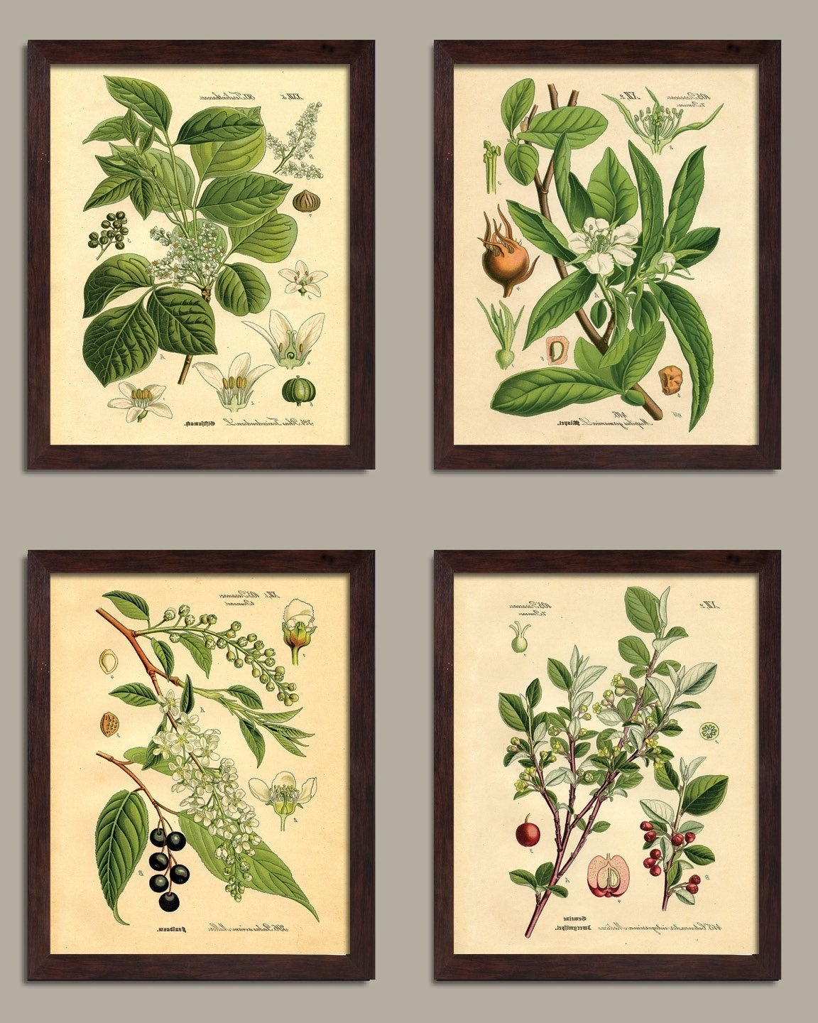 2018 Amazon: Popular Old Fashioned Plant Botanical Prints; Four Pertaining To Framed Botanical Art Prints (View 1 of 15)