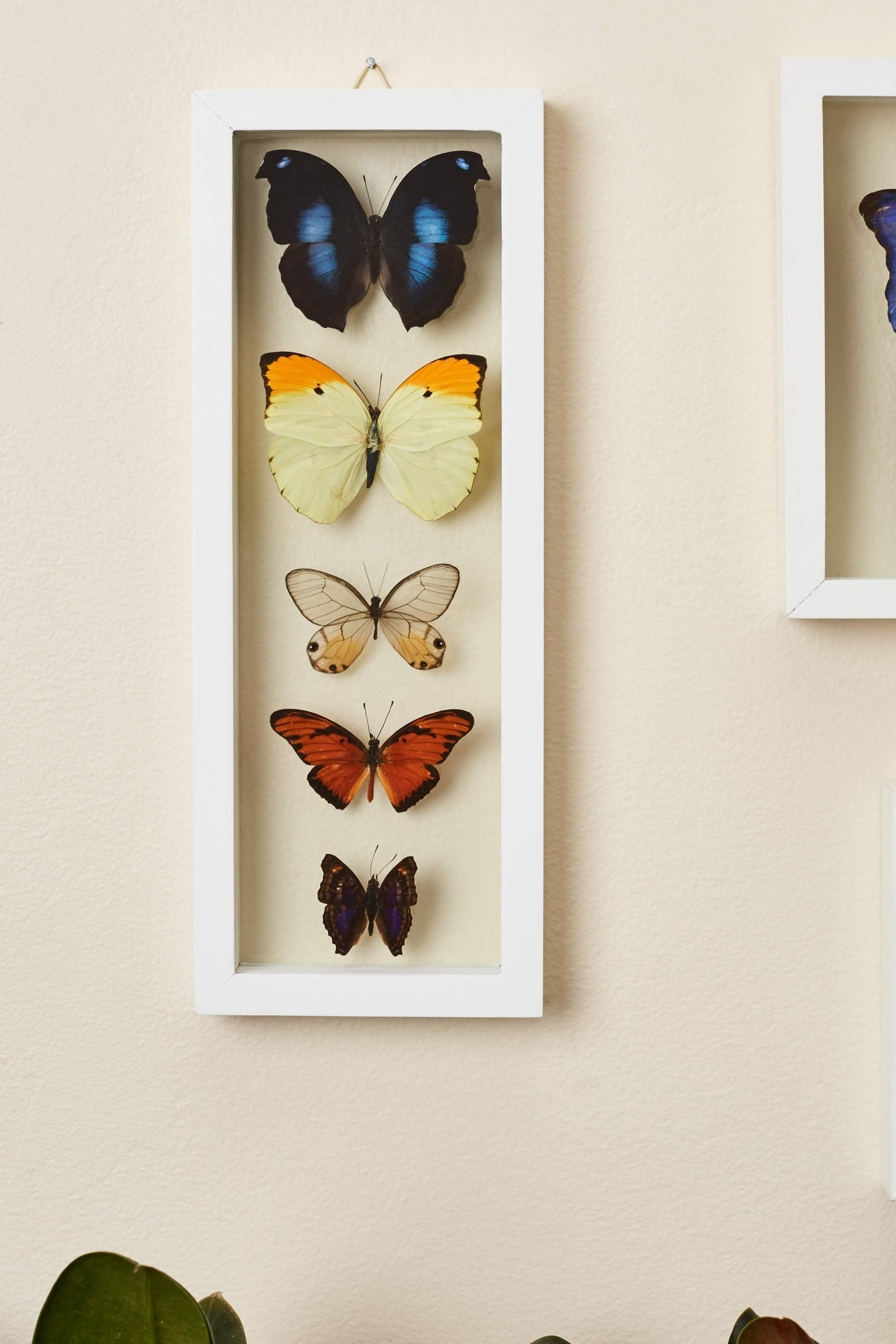 Best And Newest Earthbound Canvas Wall Art Regarding Search Results For: 'butterflies' – Earthbound Trading Co (View 3 of 15)