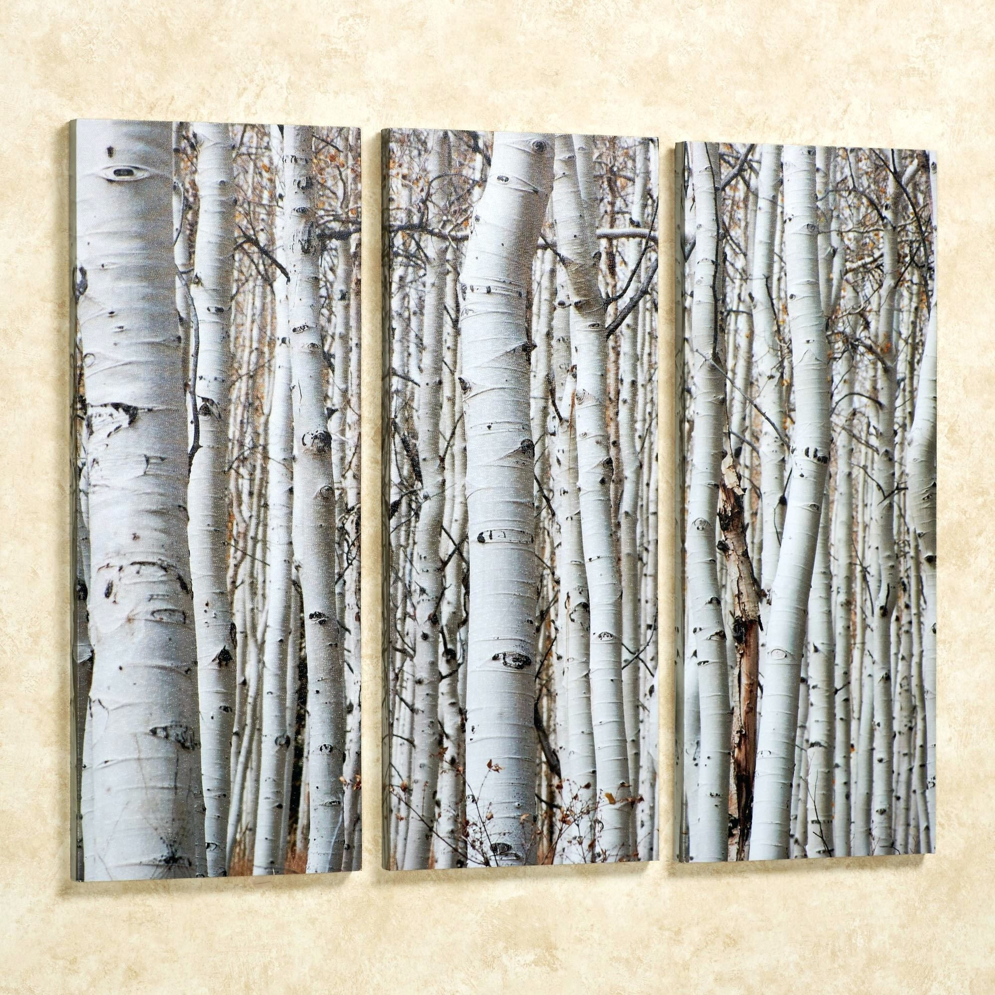 Featured Photo of Birch Trees Canvas Wall Art