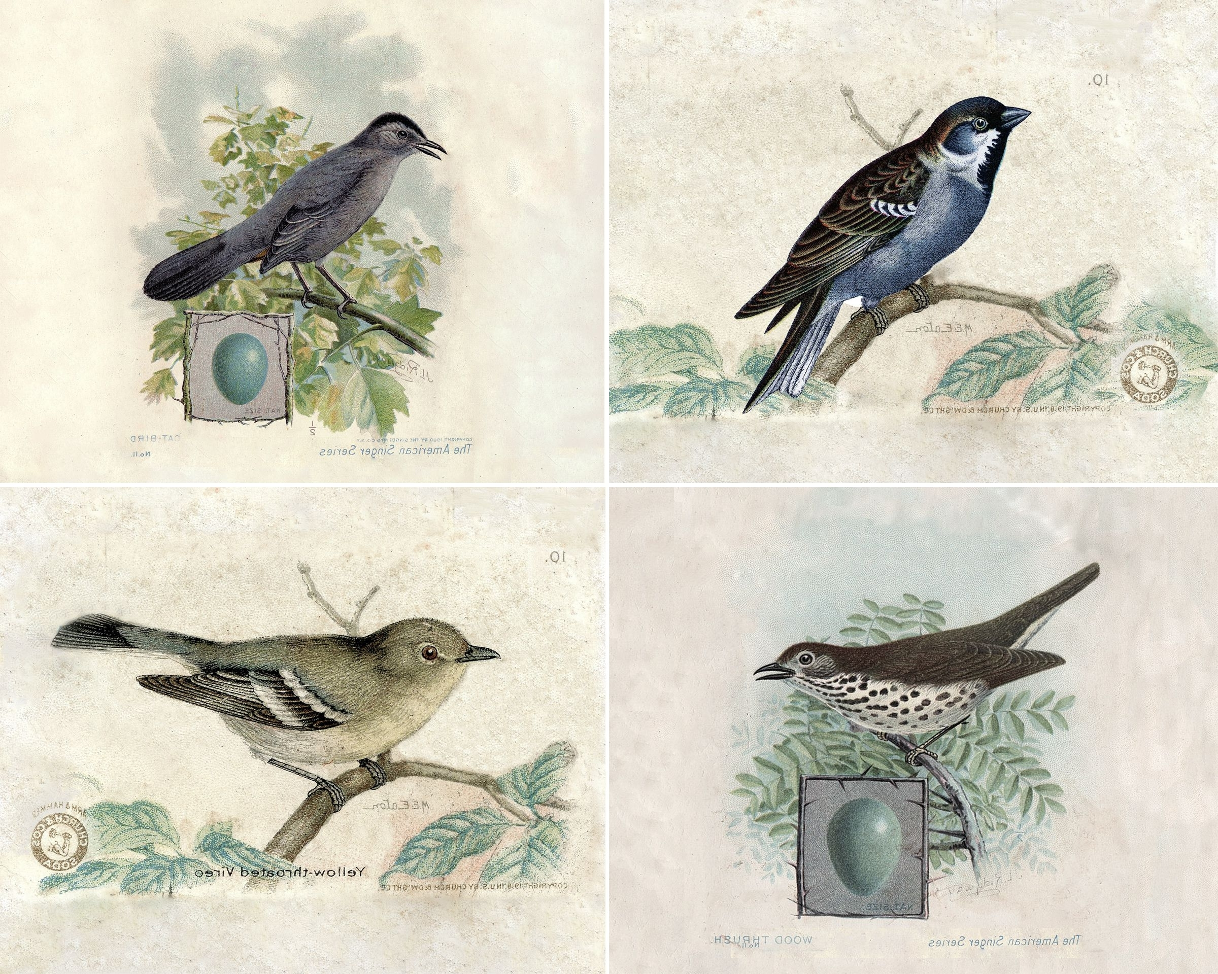 Bird Prints, Prints And Bird In Famous Birds Framed Art Prints (View 2 of 15)