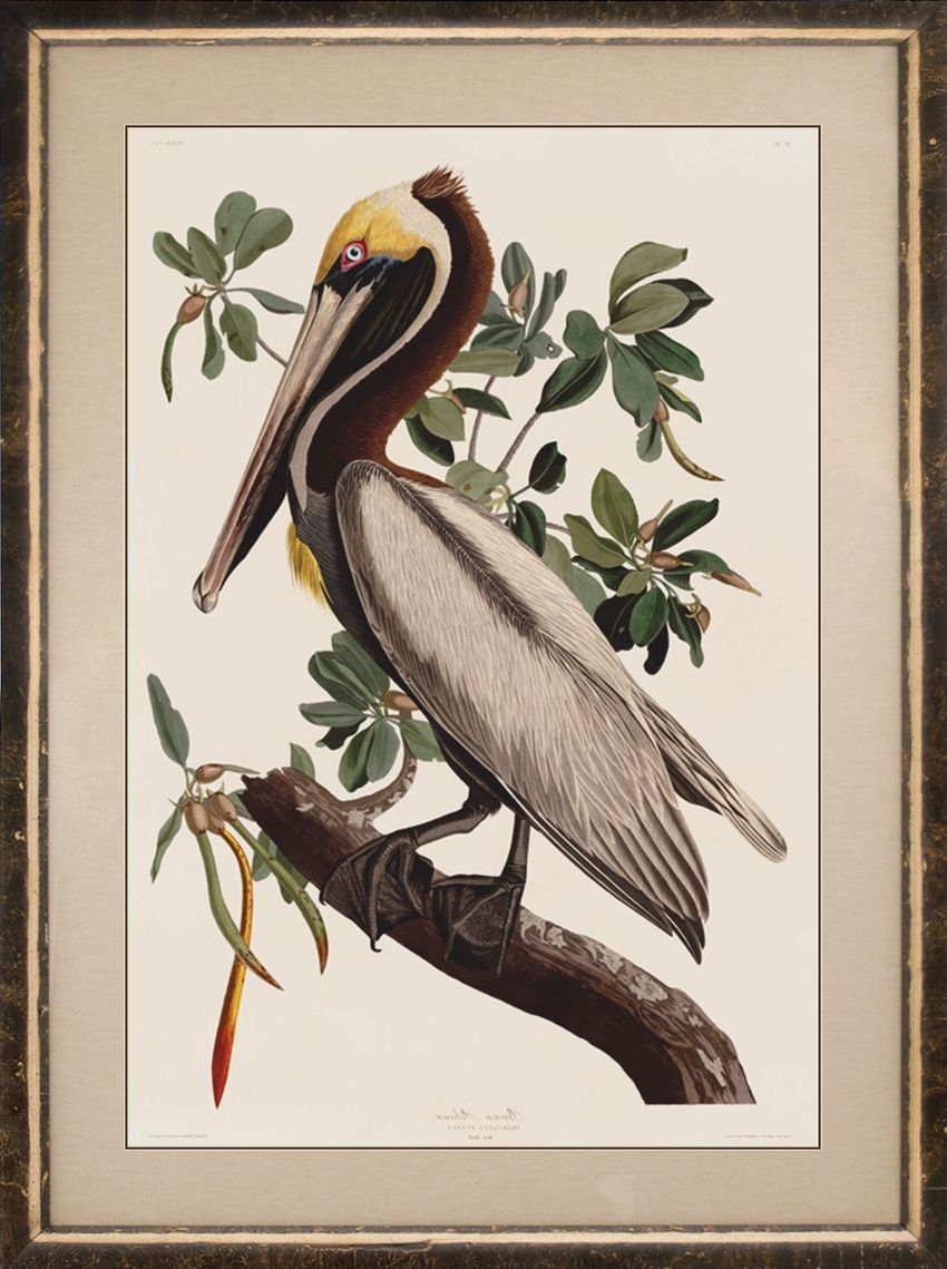 Birds Framed Art Prints For Popular Birds Framed : Nostalgia Fine Art – Antique Prints – Giclee Prints (View 4 of 15)