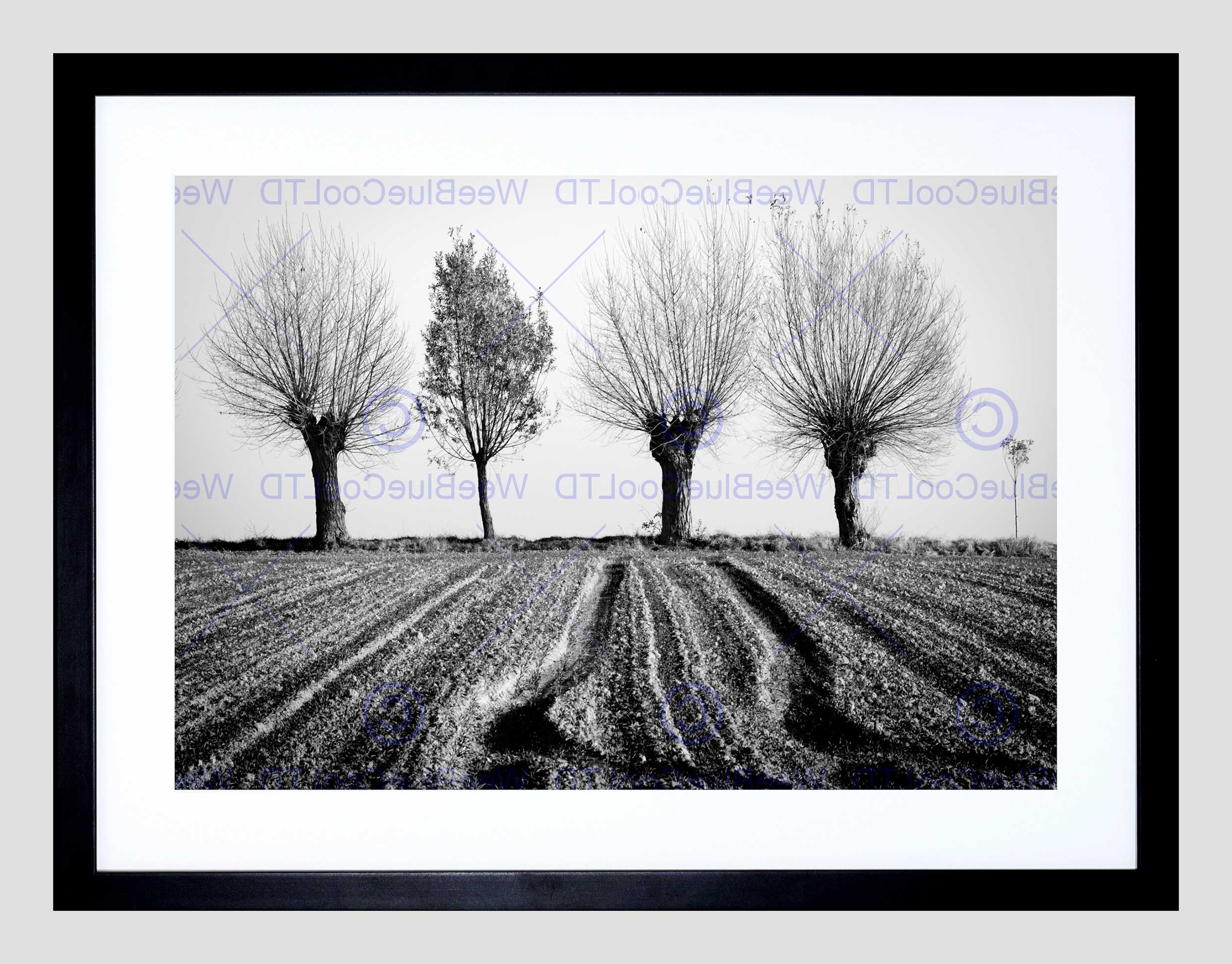 Black And White Framed Art Prints Regarding Famous Trees Horizon Black White Black Frame Framed Art Print Picture (View 5 of 15)