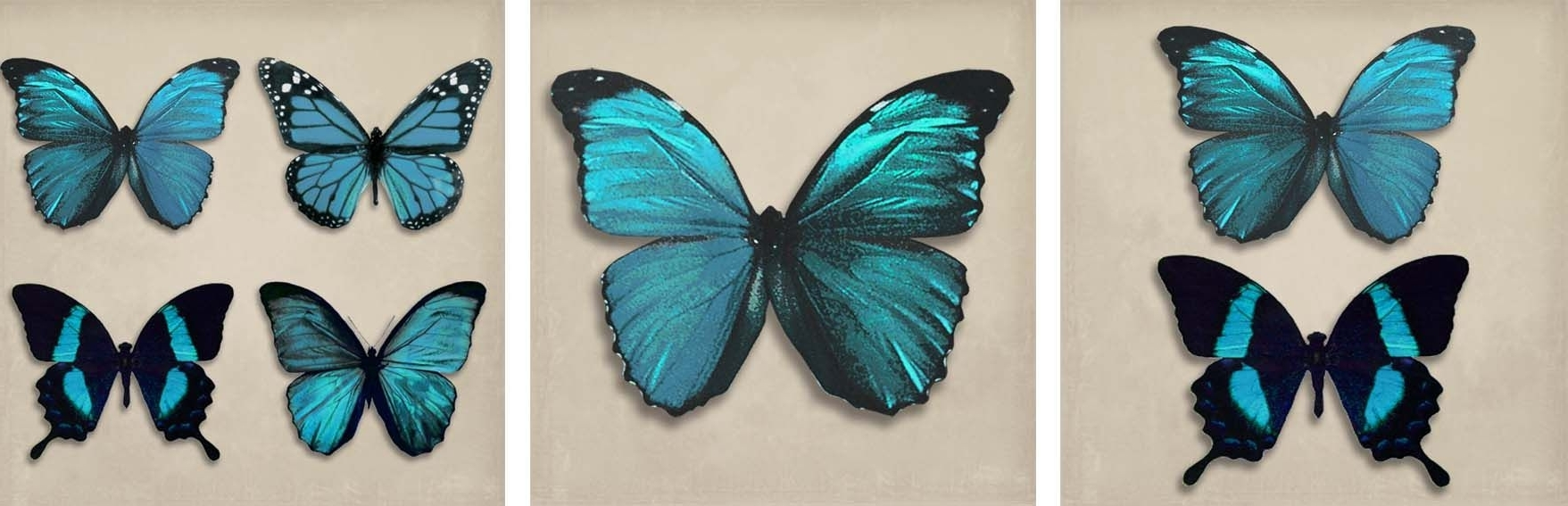 Butterflies Canvas Wall Art Within Current Teal Butterflies Set Of 3 Canvasesarthouse : Wallpaper Direct (View 5 of 15)