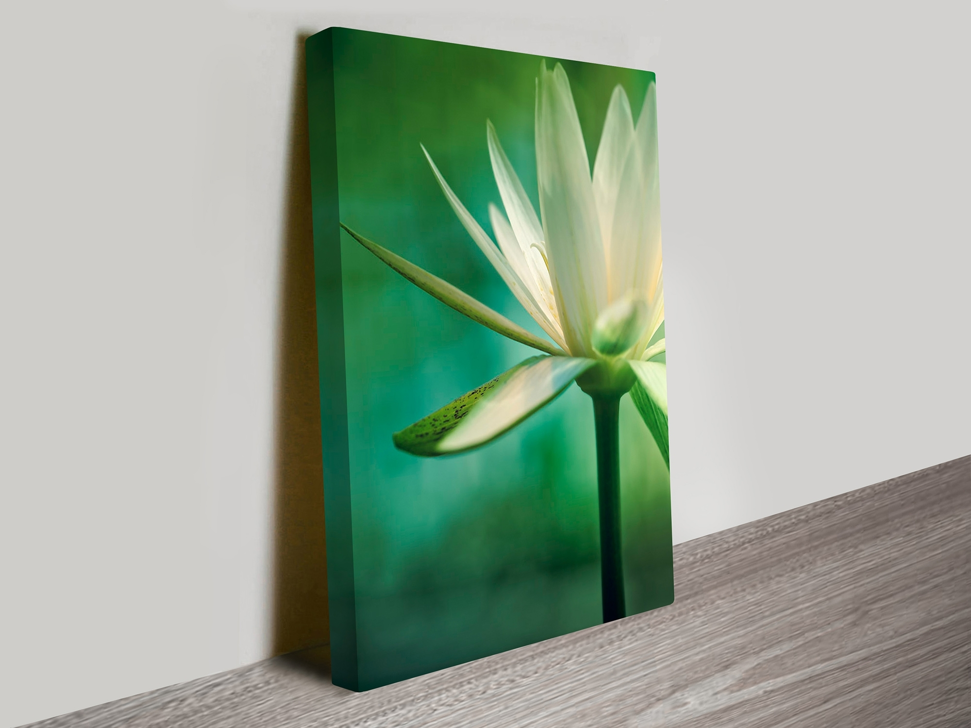 Canvas Wall Art In Australia Regarding Preferred Flower Artwork On Canvas Prints Australia (View 4 of 15)
