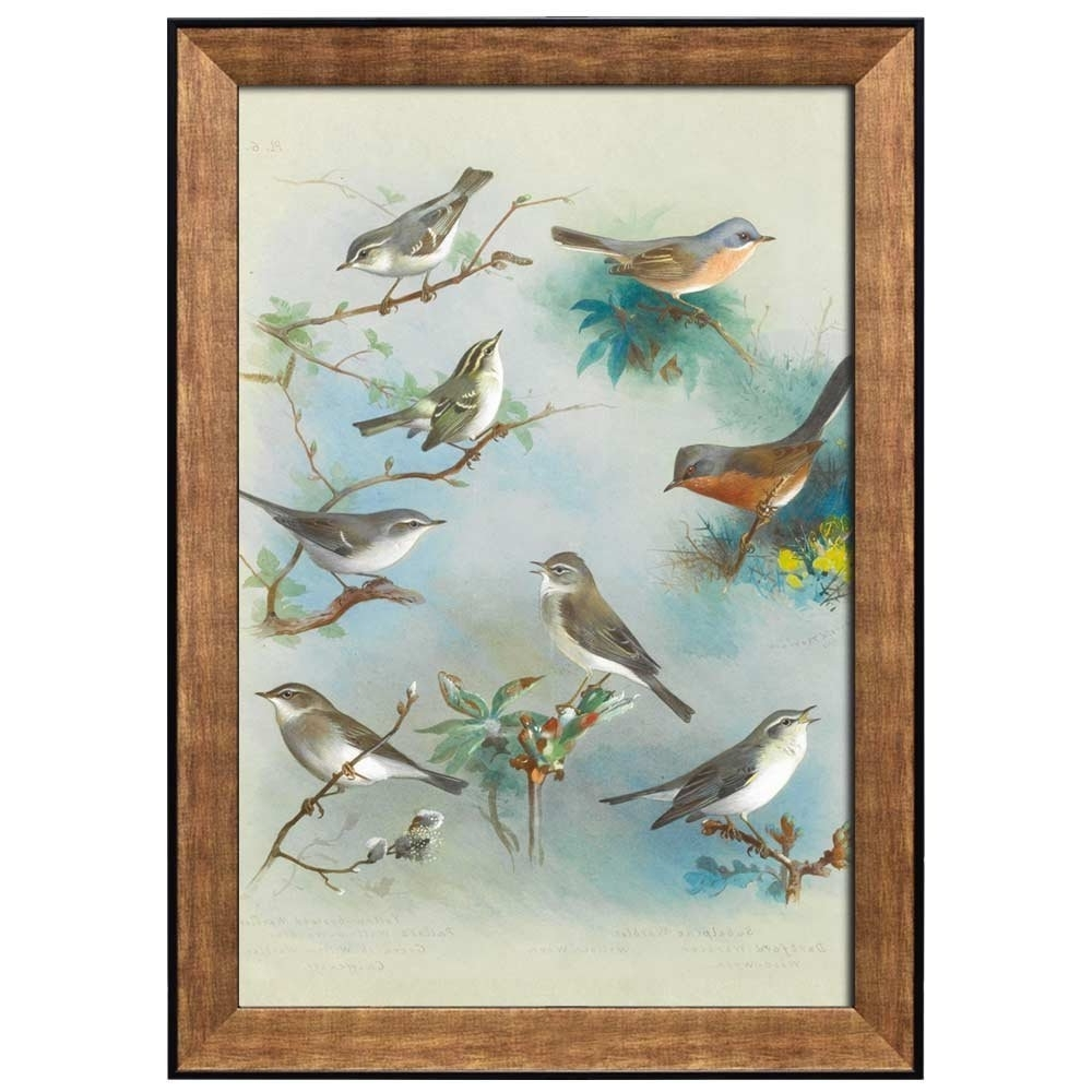 Favorite Wall26 – Art Prints – Framed Art – Canvas Prints – Greeting Inside Birds Framed Art Prints (View 13 of 15)