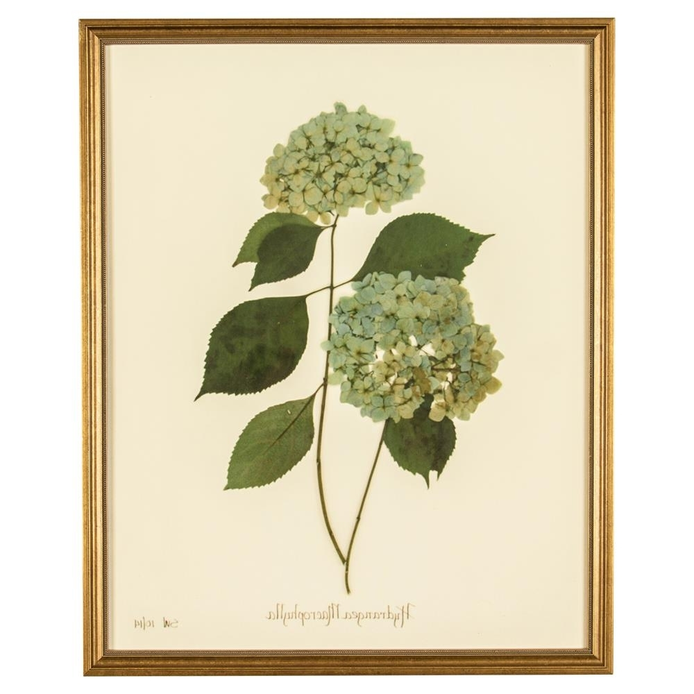 French Hydrangea Macrophylla Print Botanical Framed Wall Art – Ii In Most Current Framed Botanical Art Prints (View 12 of 15)