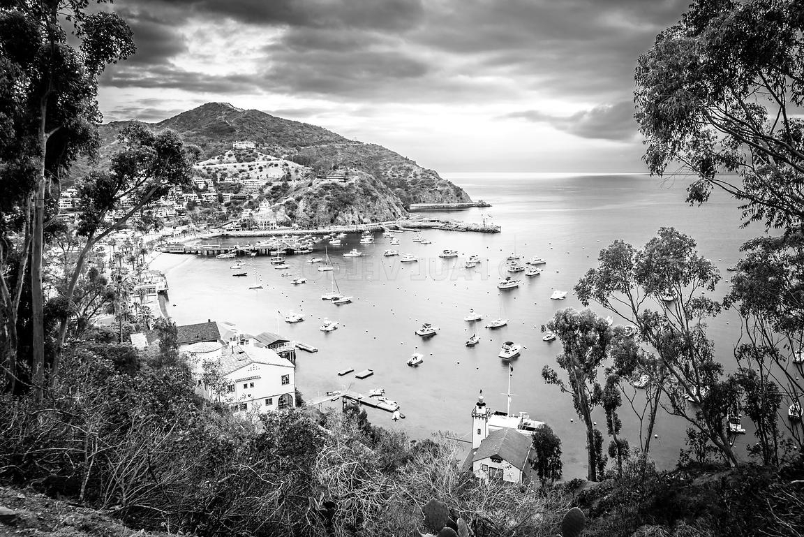 Image: Catalina Island California Black And White Photography Intended For Fashionable Black And White Photography Canvas Wall Art (View 13 of 15)