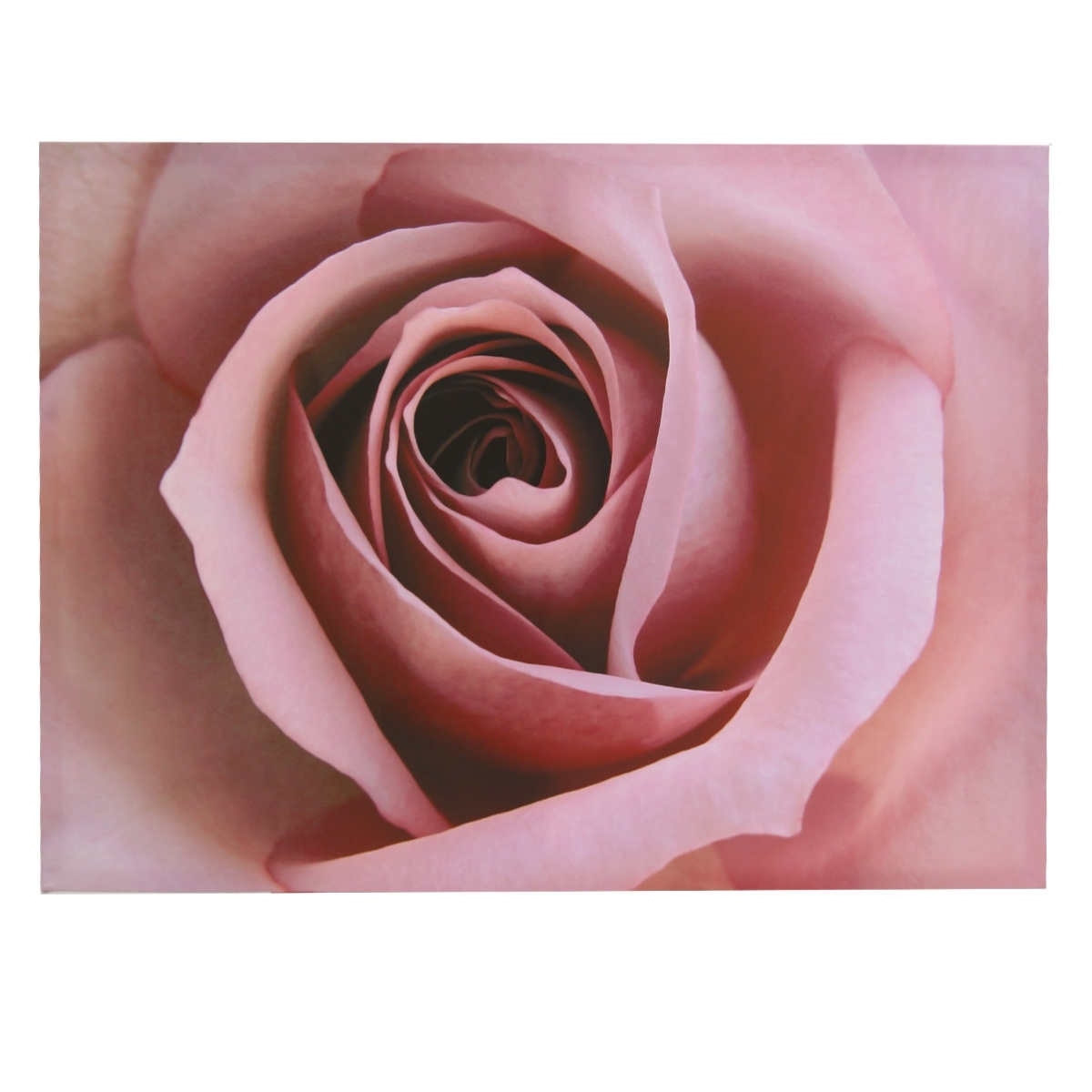 Latest Roses Canvas Wall Art Pertaining To Pink Rose Canvas Wall Art (Gallery 1 of 15)