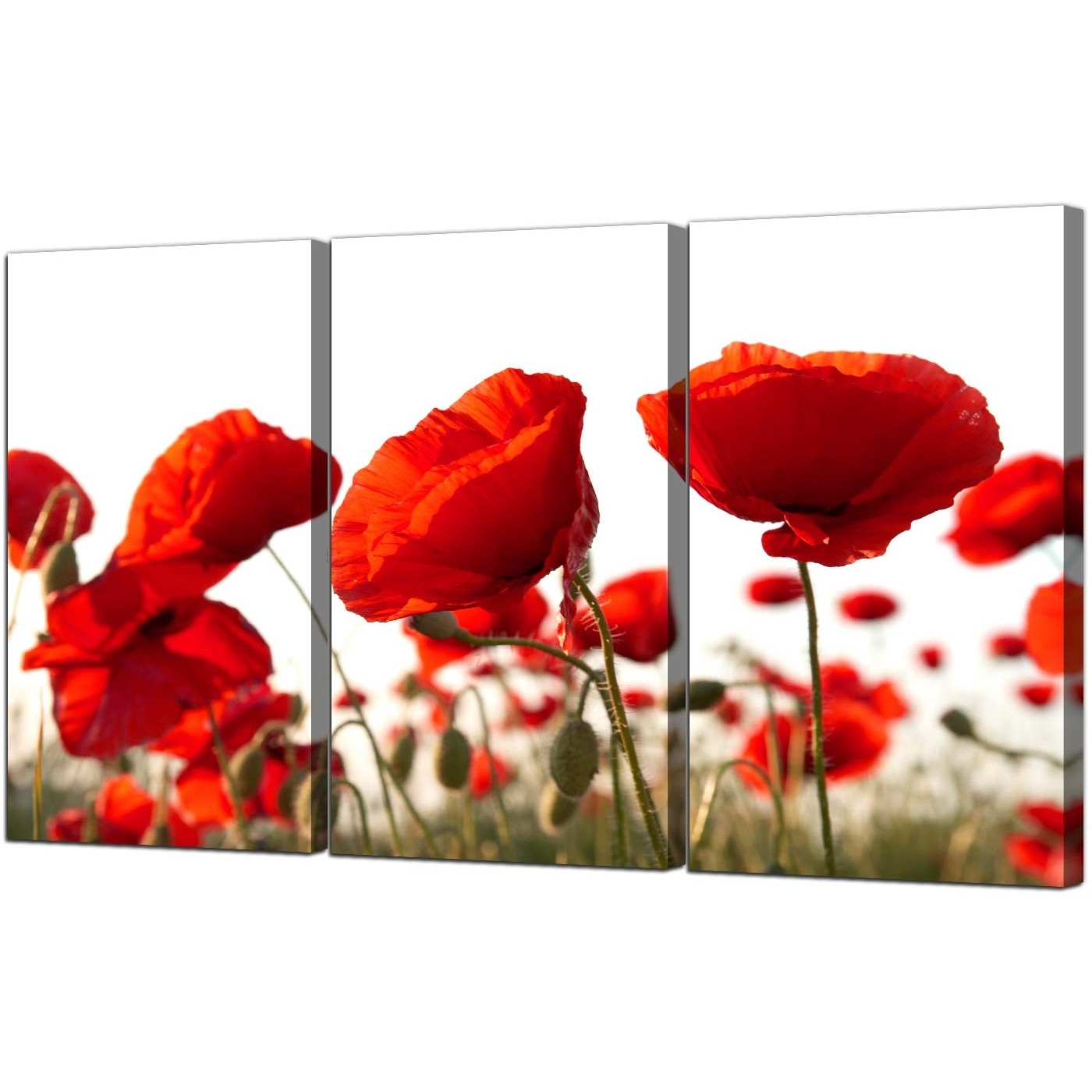 Most Current Poppy Canvas Wall Art Set Of 3 For Your Living Room Intended For Red Flowers Canvas Wall Art (View 4 of 15)