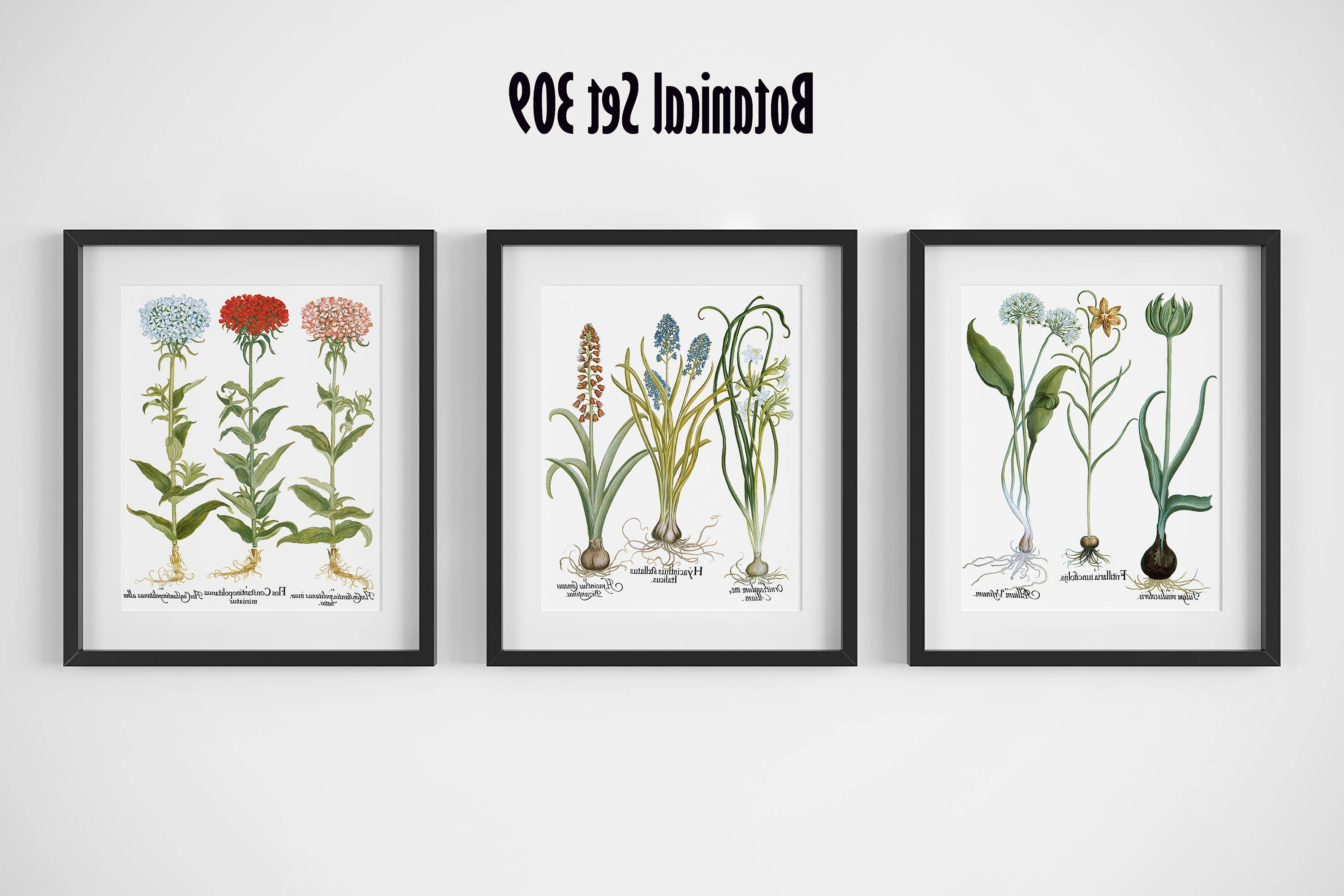 Most Popular Botanical Print Set Of 3, Framed Botanical Art, Vintage Floral With Framed Botanical Art Prints (View 7 of 15)