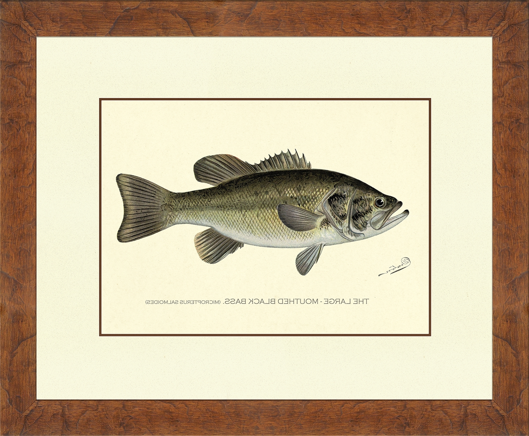 Newest Denton Fish : Nostalgia Fine Art – Antique Prints – Giclee Prints Within Bass Framed Art Prints (View 12 of 15)
