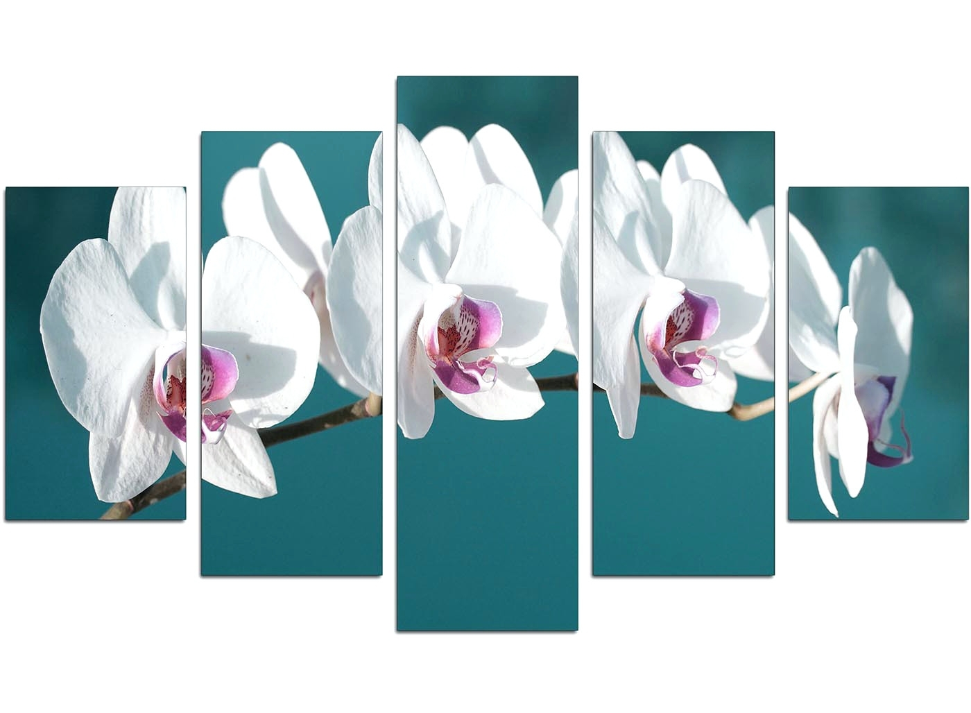 Orchid Canvas Wall Art With 2018 Wall Arts ~ Pink Orchid Canvas Wall Art Blue Orchid Canvas Wall (Gallery 9 of 15)