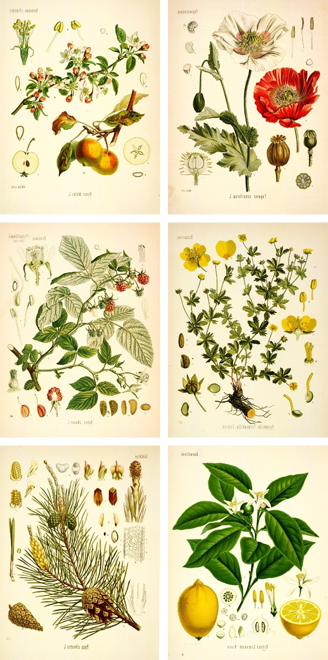 Pinterest Within Well Known Framed Botanical Art Prints (View 14 of 15)