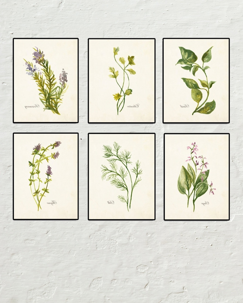 Popular Framed Botanical Art Prints Throughout Watercolor Herbs Set No (View 10 of 15)