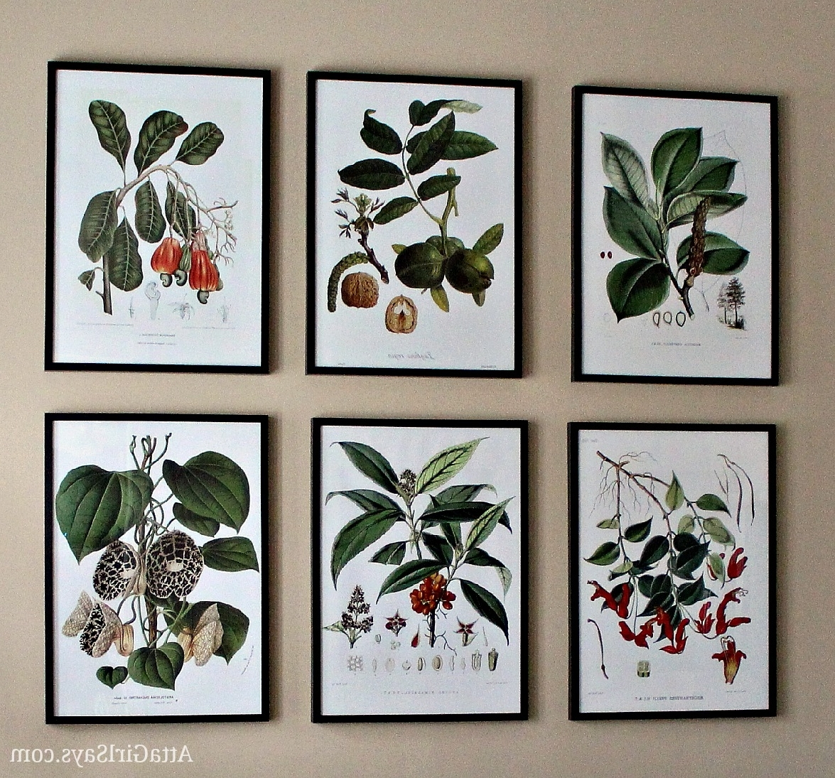 Popular Where To Find Inexpensive Antique Botanical Prints Inside Framed Botanical Art Prints (View 11 of 15)