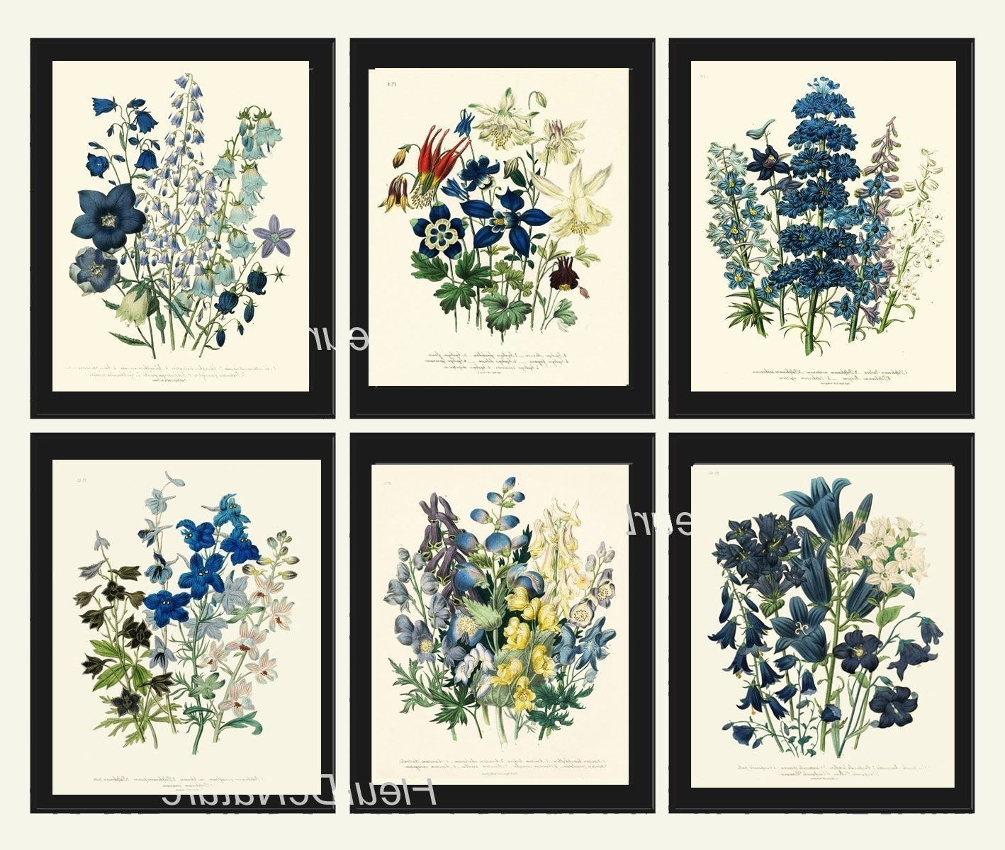 Preferred Flowers Framed Art Prints Pertaining To Amazon: Botanical Print Set Of 6 Prints Unframed Antique Blue (Gallery 10 of 15)